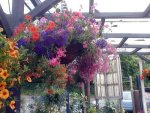 red hanging basket