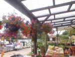 summer hanging baskets