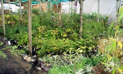 garden centre anlex in bloom