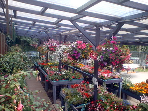 hanging baskets selection