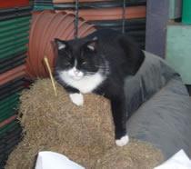 Mr Tiggs sitting on hay